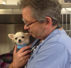 A very small puppy chihuahua is held by a veterinary cardiologist after surgery to correct pulmonic stenosis