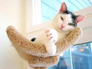 A white and grey cat sitting in a cat tree bed