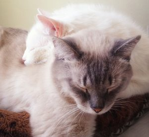 Two cats sleeping nestled together