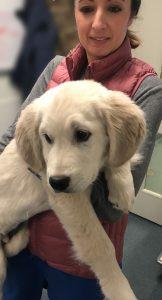 A Golden Retriever puppy being held by a veterinary technician