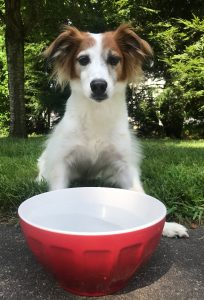 a dog sitting in front of a large bowl of water