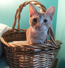 A kitten sitting in a wicker basket