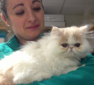 A fluffy kitten being held by a cardiology technician