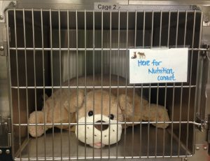 Large, frumpy stuffed dog inside a cage pretending to be here for a nutrition consult