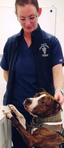 A Pitbull dog stands with his paws on the counter while getting pats from a veterinary technician