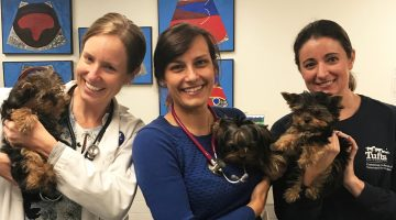 Three women hold 3 Yorkshire Terrier puppies who all have congenital heart defects