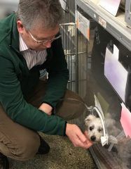 A veterinary cardiologist visits with a dog in an oxygen cage