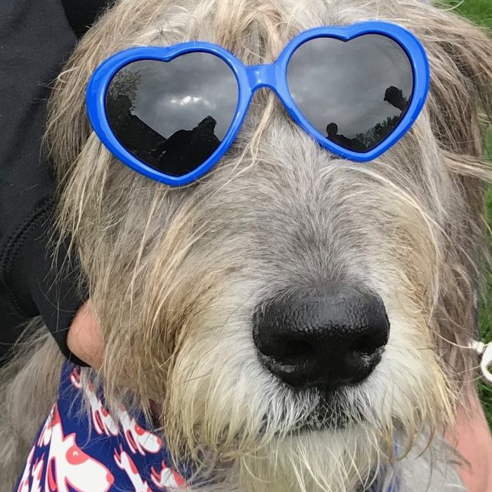 Wolfhound wearing heart shaped sunglasses
