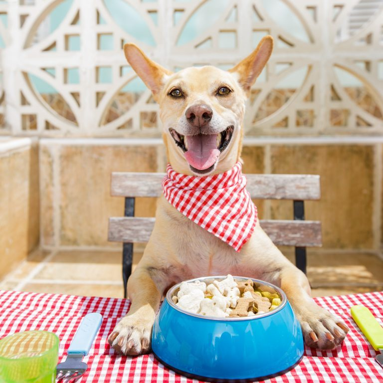 A dog sitting at a table, front paws on top of table, red and white cloth napkin tied around his neck, and a big bowl of food in front of him.