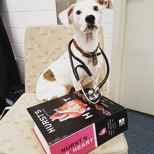 HS.msc.dog.book.stethoscope_About